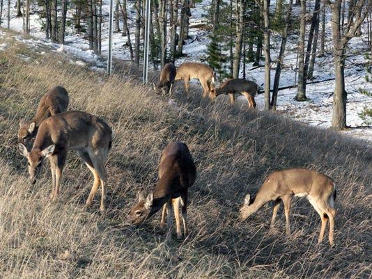 636639919660631751-deer-42611-spread-es.jpg
