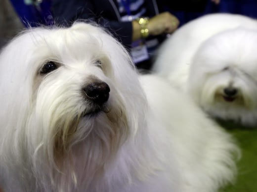 What Time Is The Westminster Dog Show On Tv Today
