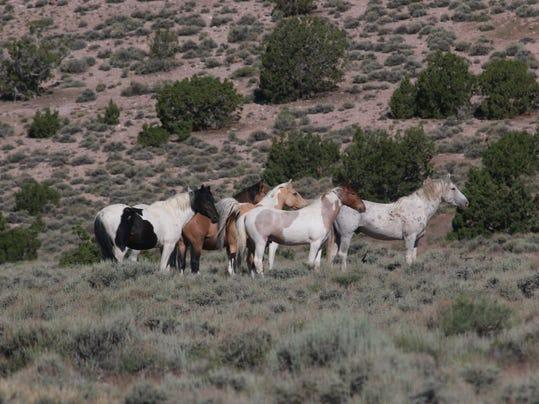 CC STG WILD HORSES 0609 04.JPG