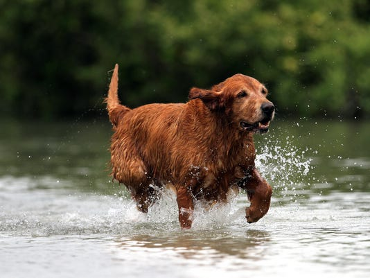 Dog Park Riley.jpg
