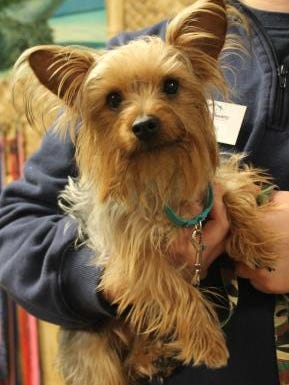 After being found in Howard last month, Nicholas will be reunited with his owner from Arizona on Friday. The dog disappeared from the woman's fenced yard several months ago.