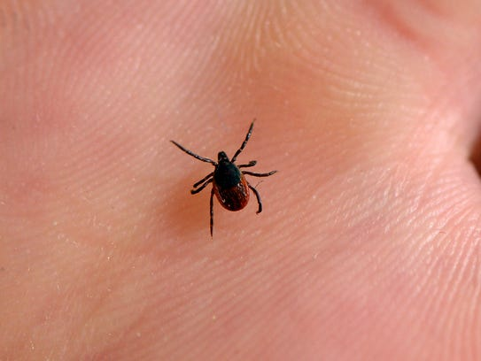 Vermonters are girding for an unusually strong tick