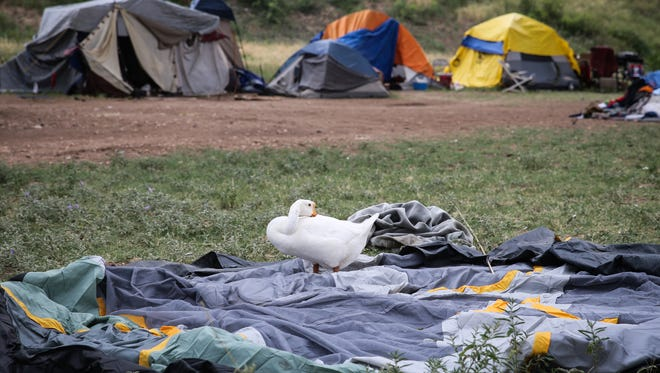 A goose sleeps on top of a tent being taken down Tuesday, May 30, before the deadline to clear out of tent city under the Houston Harte Expressway in San Angelo.