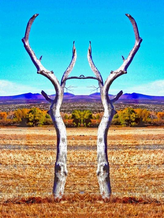 Bosque-Dream.jpg