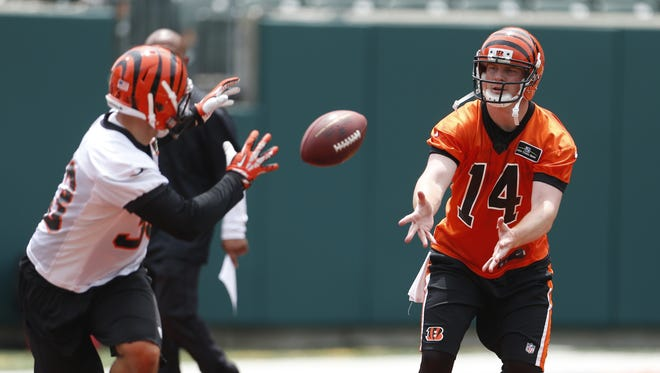 Cincinnati Bengals quarterback Andy Dalton, 14, pitches out to running back Rex Burkhead, 33, during mini-camp.