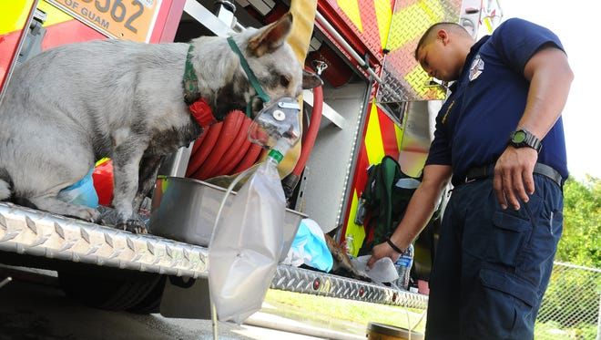 A dog sitting at the rear of a fire truck is administered oxygen while the breathing of another canine is monitored by Guam Fire Department firefighter B.K. Arceo at the scene of a house fire in Barrigada on Thursday, Sept. 24