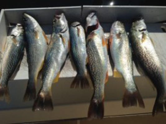 0928 OUTDOOR Purul weakfish