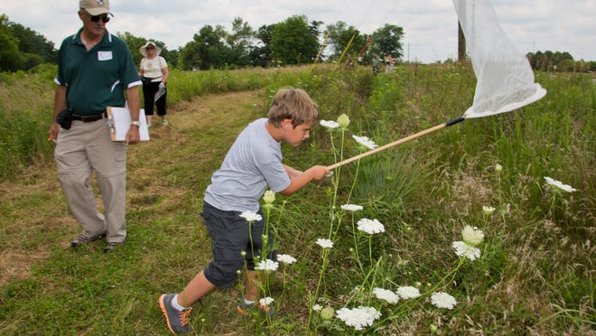 Cohen Murphy tries to catch a butterfly Saturday during the 11th annual Butterfly Encounter at Evonik's Tippecanoe Laboratories Wildlife Habitat Area near Lafayette. The event is sponsored by Evonik and the Department of Entomology at Purdue University.
