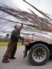 Arborist technicians (from the right) Gene Aube and