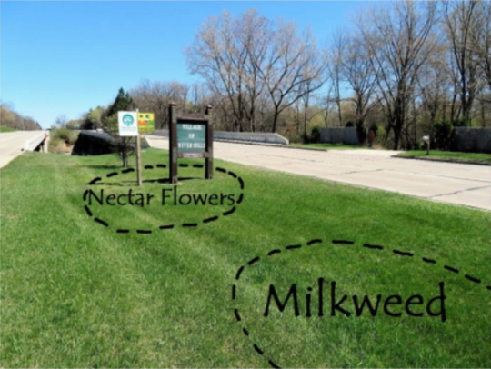 The village of River Hills will plant milkweed and