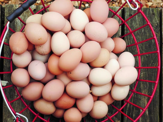 Farm fresh eggs are just a flock away.