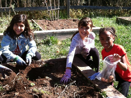 Second graders: Left to right Alyssa Hammoud, Valentina Galitis, and Angelina Bien-Aime dig for potatoes in ALT's garden, which has been yielding fruits, vegetables and flowers for nearly a decade.