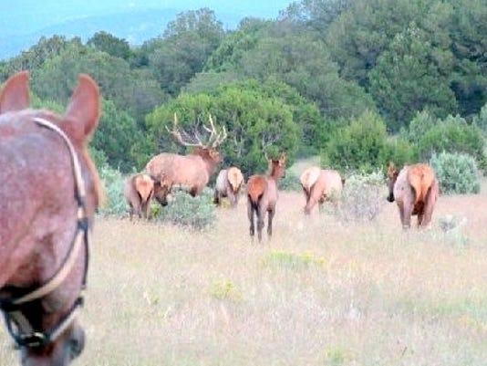 Spanky and elk herd