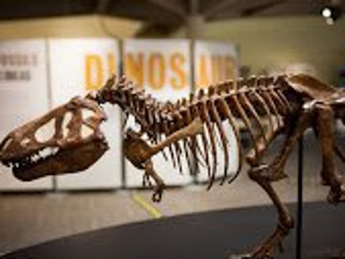 This model of a Tyrannosaurus rex is part of a new exhibit about dinosaurs opening at the McClung Museum of Natural History and Culture. Photo courtesy of the American Museum of Natural History.