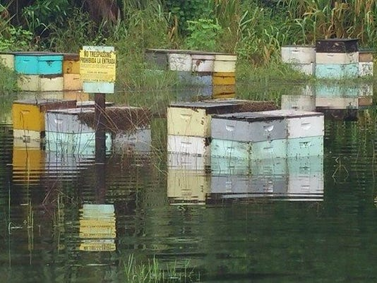 636427250242398513-flooded-hives.jpg