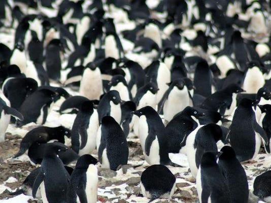 636555739071992152-penguins.jpg