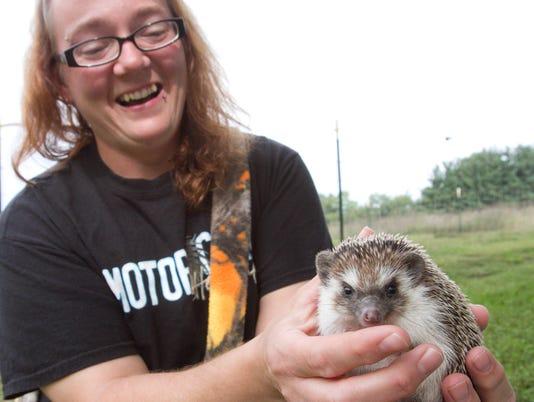 200 hedgehogs_01.jpg