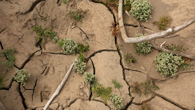 Dried and cracked soil on the lake bottom of Detroit Lake, Monday, September 15, 2015, in Detroit, Ore.