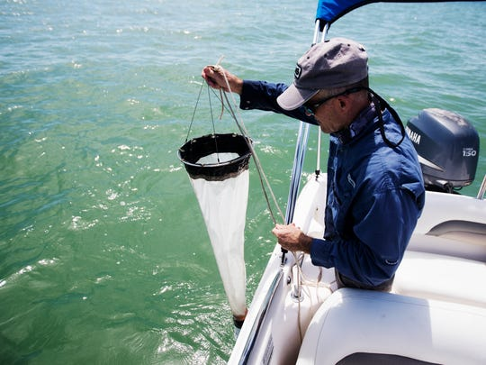 Rick Bartleson, a water quality scientist for the Sanibel Captiva Conservation Foundation uses a drag net that catches microscopic organisms. The Sanibel Captiva Conservation Foundation was testing the water off of Sanibel after seeing photos of a blob from aeriels. Bartleson tested the samples and it turned out to be diatoms which are non harmful.