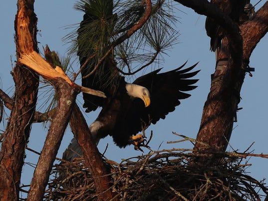 florida-eagles-122717