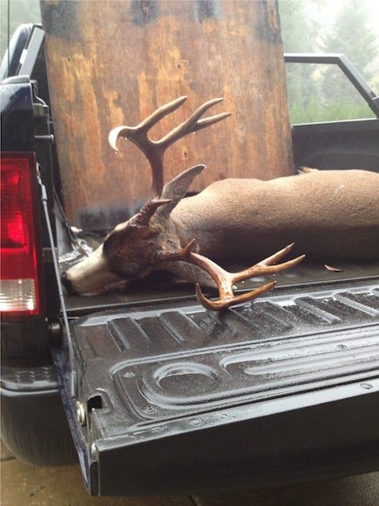 SAL1124-Dead deer