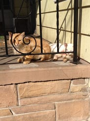 Gold Kitty and Kimba relax in a photo taken in March
