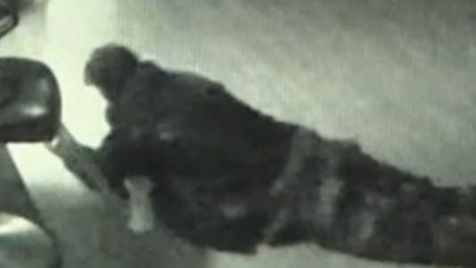 A photo taken from surveillance video shows a suspected wig thief.