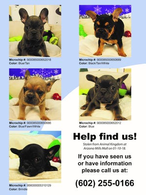 Images of the stolen French bulldog puppies.