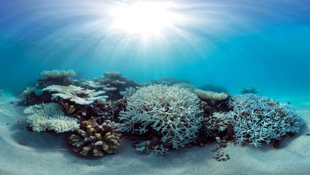 This May 2016 photo released by The Ocean Agency/XL Catlin Seaview Survey shows coral that has bleached white due to heat stress in the Maldives. Coral reefs, unique underwater ecosystems that sustain a quarter of the world's marine species and half a billion people, are dying on an unprecedented scale. Scientists are racing to prevent a complete wipeout within decades.