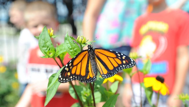 A Monarch butterfly sits on a flower in the butterfly garden at The Children's Museum of Fond du Lac.