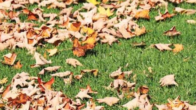 Fallen leaves are full of good things for your lawn and garden...don't throw them away!