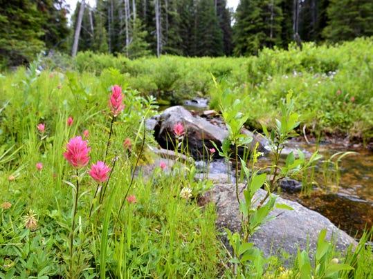 -07102015_tenderfoot creek-e.jpg_20150710.jpg