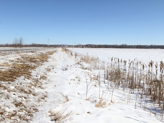 The cornfield in Caledonia looking toward Avon. This is the general area of where Tammy Jo Alexander's body was found.
