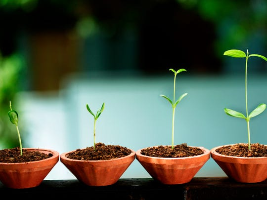 Growing from seeds is not difficult as long as you don't allow the seeds to die.