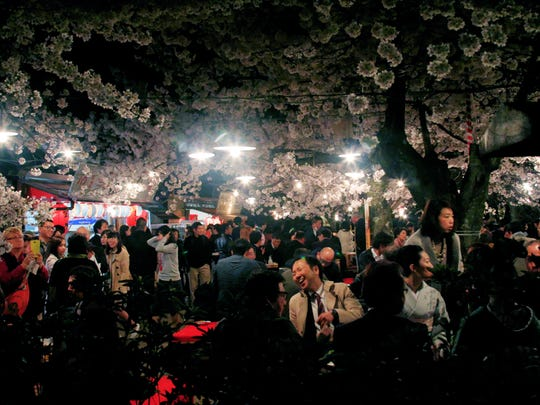 Hanami season at Maruyama Park in Kyoto, which features