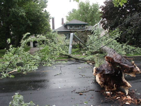 A massive tree fell right into Stan Scheibe's yard