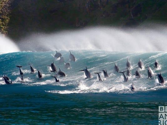 636480678309078428-Dolphins-BBCA.jpg