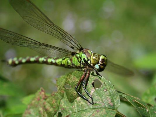 636676154792010970-dragonfly-1058489.jpg