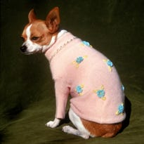 Don't assume your dog loves that sweater: Column