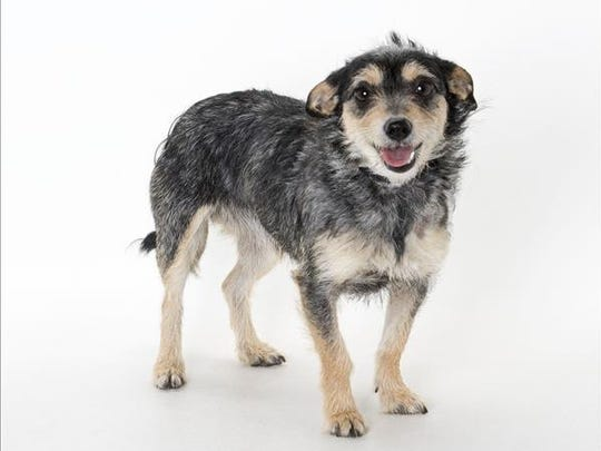 Louise, 1-year-old female terrier mix dog. No. 100356.