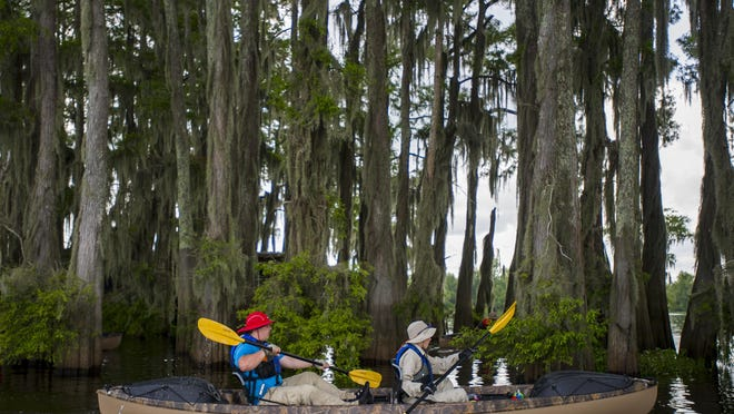 Members of Boy Scout Troop 383 of Evansville, Indiana, paddle in the Atchafalaya Basin near Henderson in 2014.