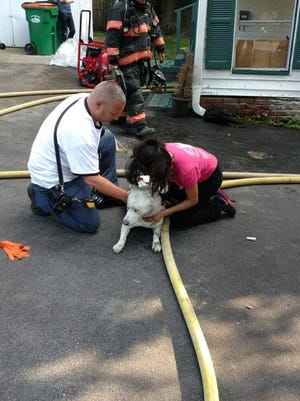 This dog was rescued from a fire Wednesday by Arlington Fire District firefighters.