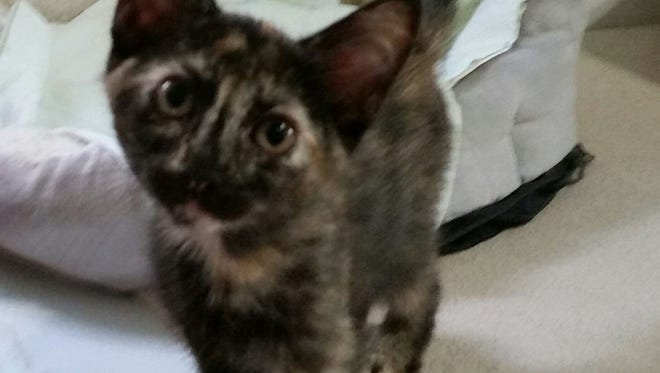 Isobel loves to frolic and cavort with the other kittens  at Domino's.