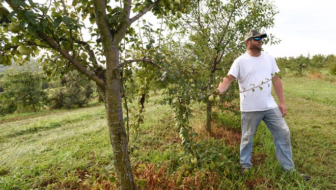 Jim Siegrist talks about the pears in his family's orchard,that overlooks the hills of Coshocton and Muskingum counties. Siegrists grow a variety of fruits which they sell at a stand in Adams Mills and local farmers markets.