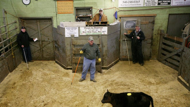 Auctioneer Jeff Showalter of Broadway, top center, calls for a starting bid on a calf at the Staunton Union Stock Yards on Friday, Nov. 28, 2014.