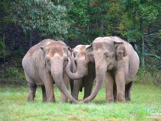 Tandur Seeds of Green gives ongoing support to the Elephant Sanctuary in Tennessee.