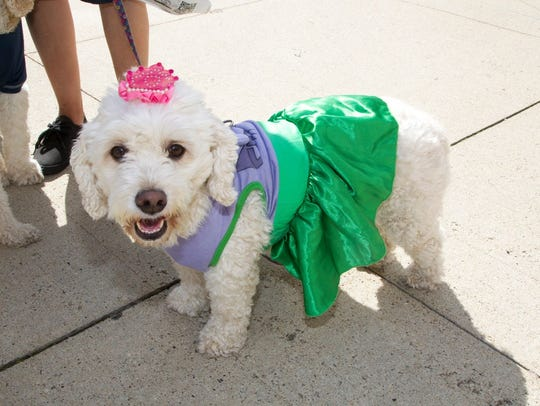 Woofstock will take place at the RiverMarket on Saturday.
