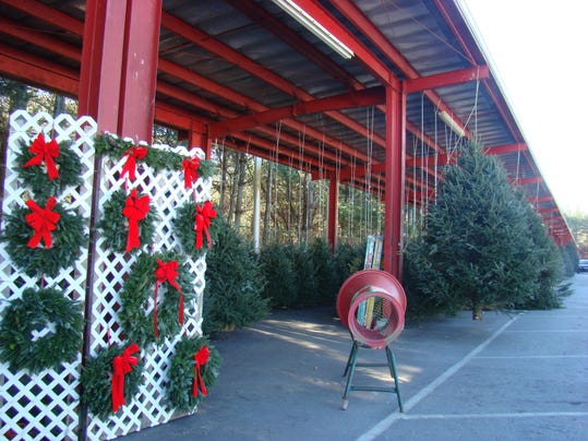 WNC-farmers-market-Christmas-trees-1
