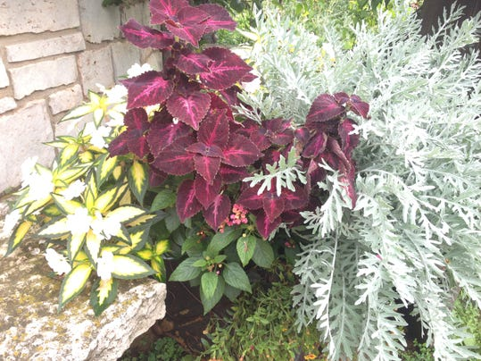 APC 021215 Yard MD BLOG-plants of the year summary 1.JPG
