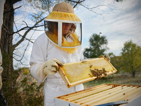 On Sunday, beekeeper Amanda Loewen lifts a comb out of one of the hives she started with friend Erin Gutwasser five months ago near Kimball.